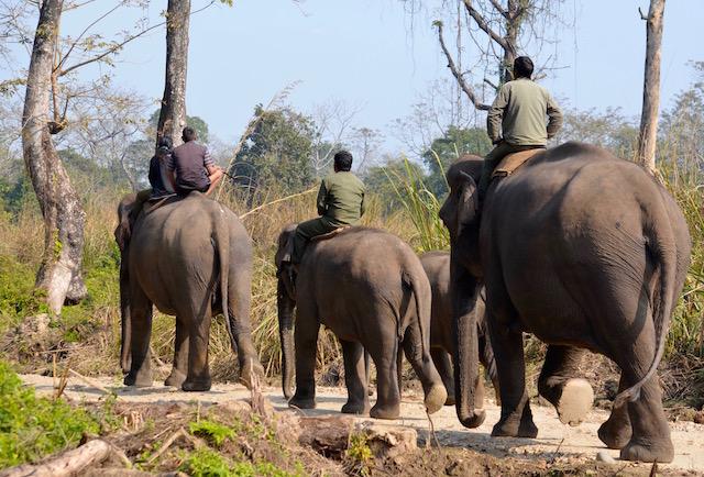 Parc de Chitwan / Népal