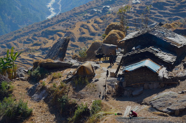 Vallée de Langtang / Népal