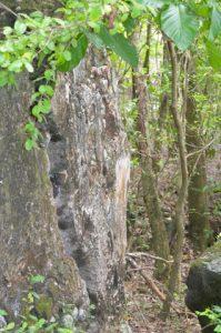 Fissure Morne Cabri