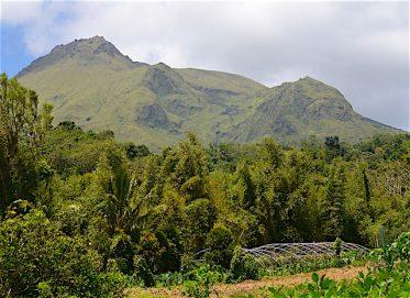 Montagne Pelee Fruits des Antilles