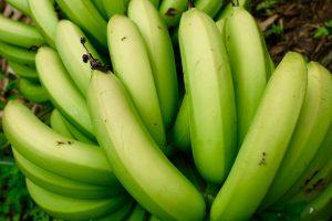 """bananes vertes """"bien manger"""""""