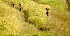 voyager femmes champ Vietnam familyevasion