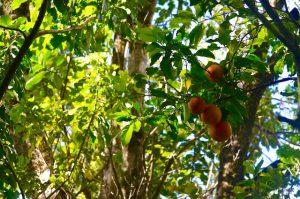 oranges bivouac