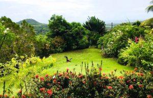 Jardin creole