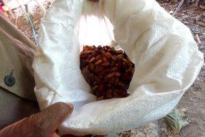 Amandes cacao