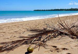 Plage et noix de coco