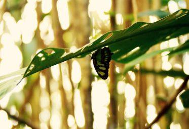 Equateur Papillon