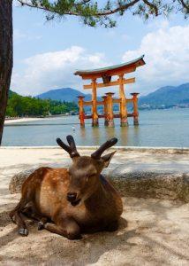 Daim - Miyajima - periple au Japon