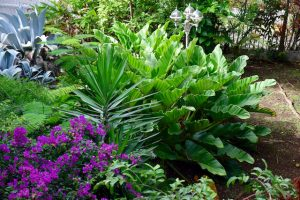 Notre jardin - Pentecote