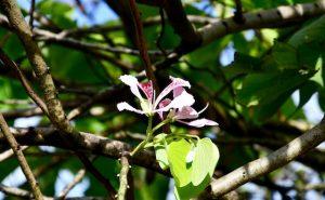Arbre-orchidées clôture de randotour