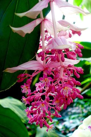 Orchidee15