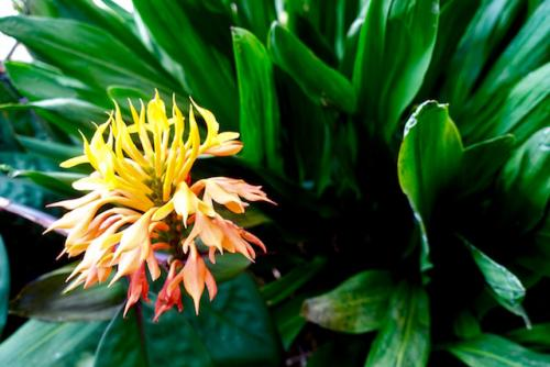 Orchidee20