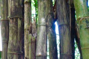 Bambou bivouac