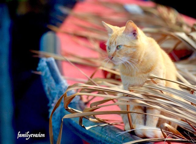 Chat article animaux