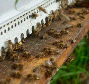 Abeille et ruche