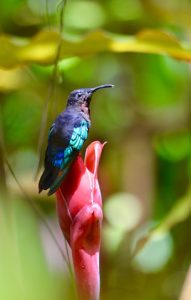 Photo et Rando - colibri