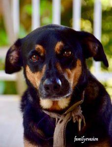 Romy et education canine