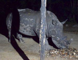 Rhinoceros - sequence animalier