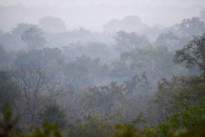 Harmattan - safari photo
