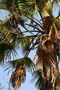 Palmier - safari photo