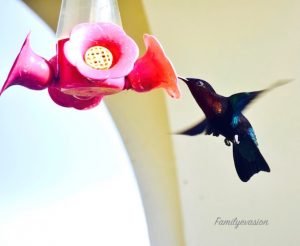 Attention - colibri