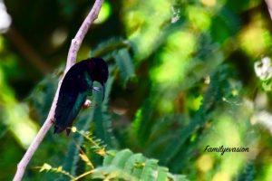 Bec courbe - colibri