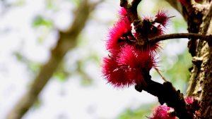 Pomme d'eau - meditation
