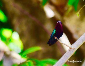 nature colibri