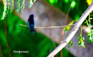 pose colibri