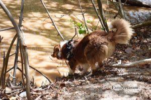 Bain chien - familyevasion