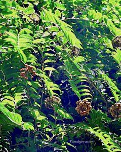 Bois Jose ou bois couille - cascade Dany - familyevasion
