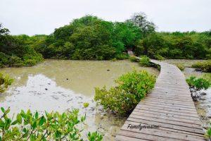 Mangrove - anse michel