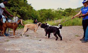 rencontre chiens