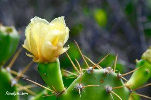 Fleur de cactus - familyevasion