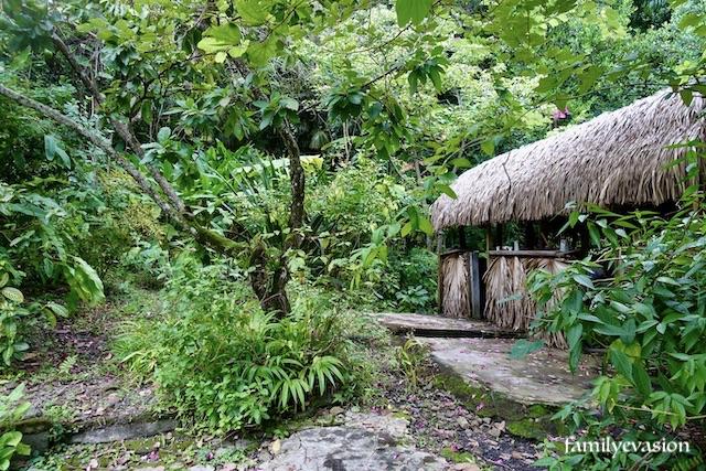 Jardin creole et case
