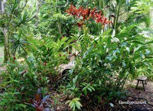 Jardin creole - fleurs