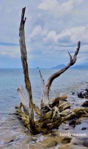 Bois flotté plage 2