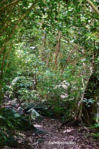 Foret secghe - Rando grande anse - Martinique