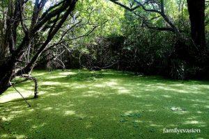 Mare temporaire - Grande Anse a Anse Dufour