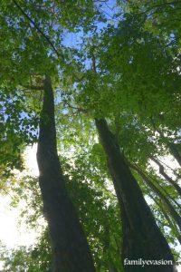 arbres - ta deuxième vie