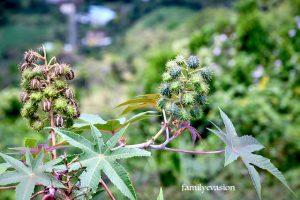 Ricin - balade florale
