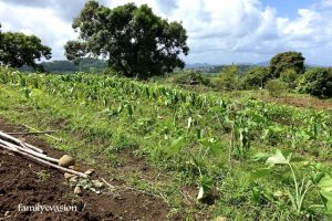champ agriculture biologique