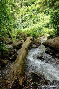 tronc riviere - cascade du Roy