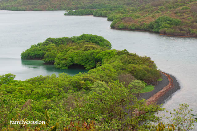 Mangrove Trou cochon