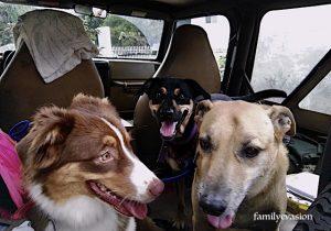 Molly, Romy, Lucky