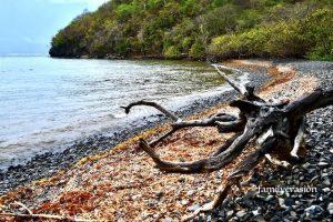 Plage nature morte - Baie du Vauclin